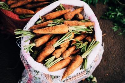 L'agriculture de subsistance: le potager 3.0