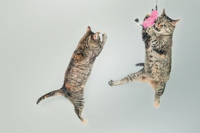 La physique quantique a des problemes de chats