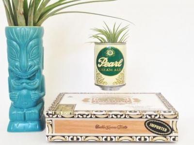 Une plante en lévitation diy dans votre salon pour moins de 100€